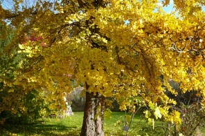 Couleurs d automne 7