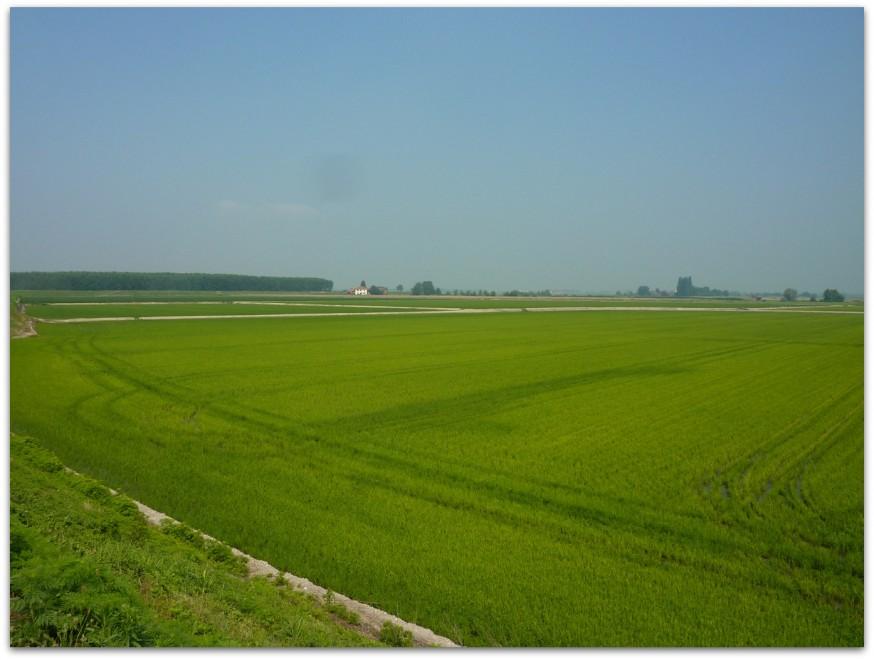 Rizieres Plaine du Po