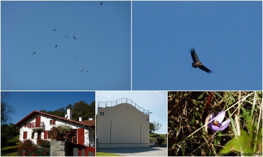 vautours - compostelle pays basque