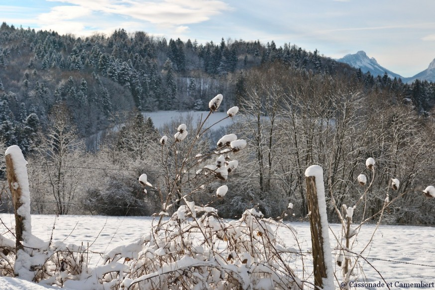 Graminees sous la neige
