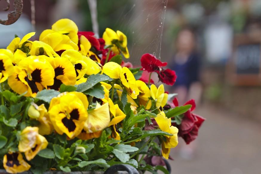Fleurs - Fontaine - Place du marché - Miltenberg