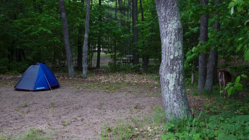 Camping a Killbear Canada - Notre tente et une biche