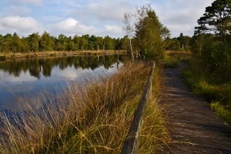 Arrivee de l automne - Tourbière - Marais Pietzmoor - Lüneburger Heide