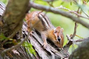 Au cœur de la vie sauvage canadienne dans le Killbear Provincial Park