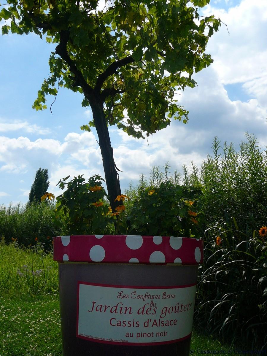 Le jardin des deux rives strasbourg cassonade et camembert for Halloween 2015 jardin franco allemand