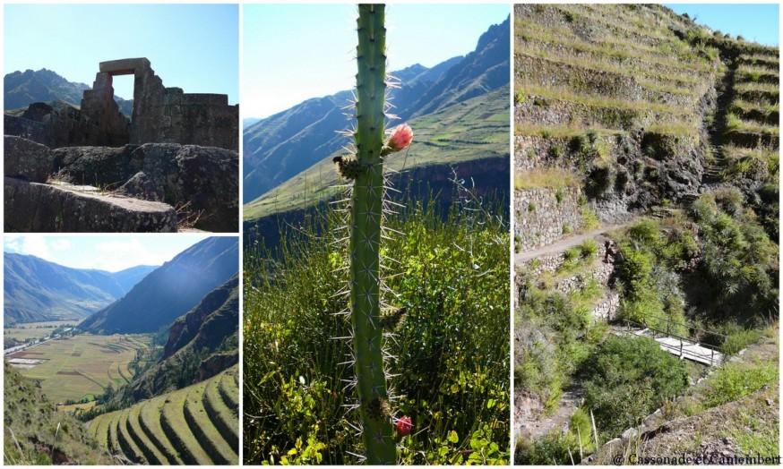 Cactus ruines de pisac