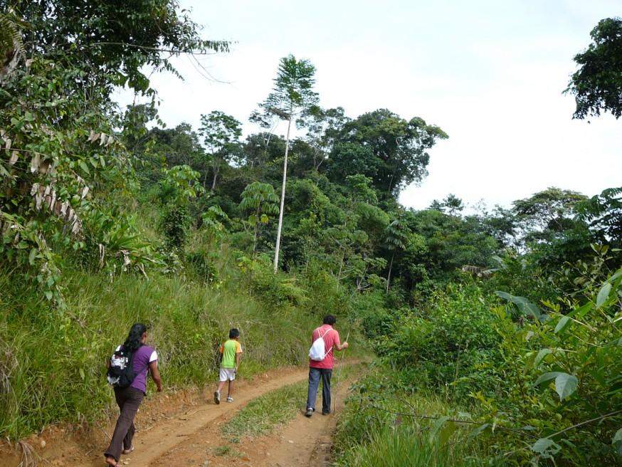 Comunidad nativa de Huacaria - Chemin d acces