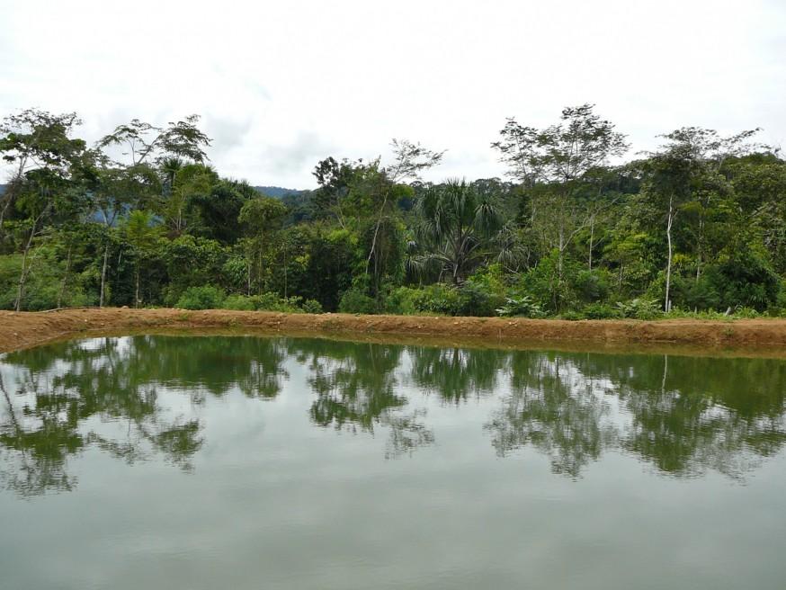 Comunidad nativa de Huacaria - Pisciculture