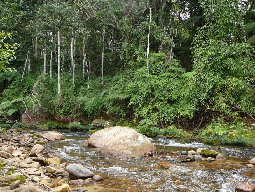 Comunidad nativa de Huacaria - Riviere 2