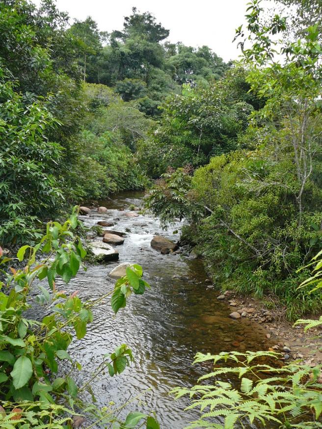 Comunidad nativa de Huacaria - Riviere