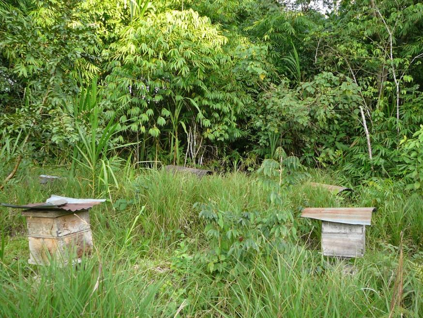 Marchande de miel Pilcopata 3
