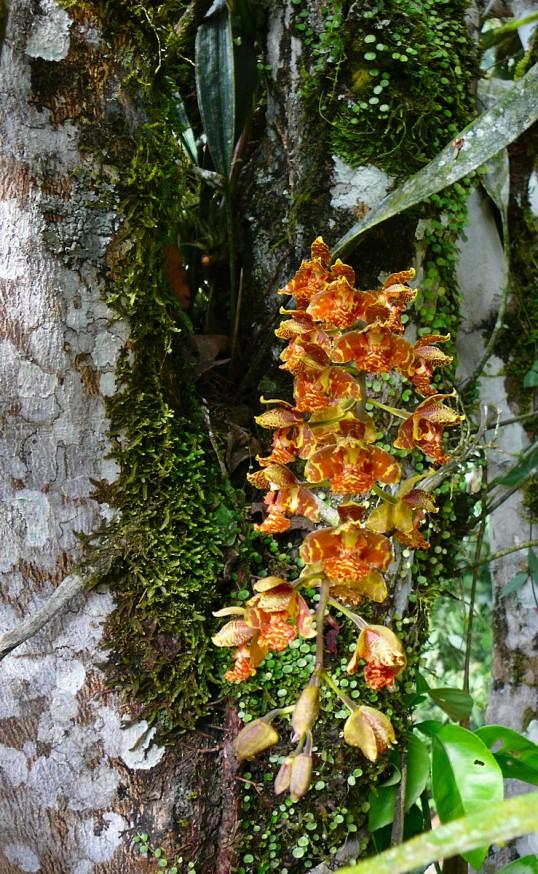 jardin botanique orchidees Atalaya 1