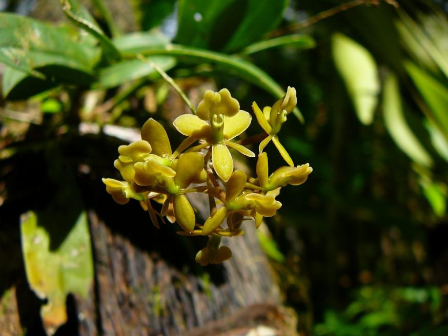 jardin botanique orchidees Atalaya 2