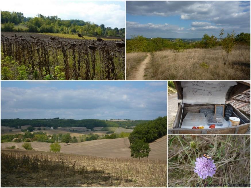 Entre Lascabanes et Lauzerte - compostelle quercy blanc