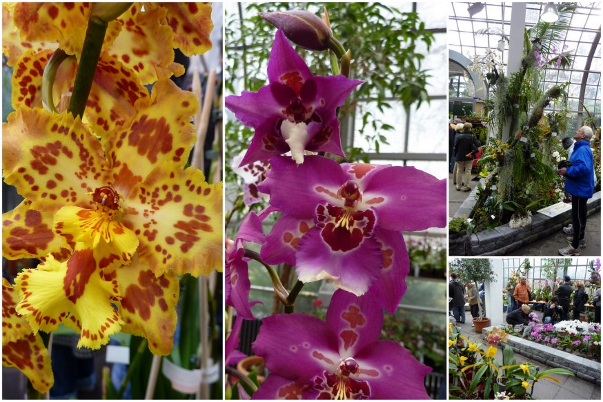 Orchidees Palmengarten 2
