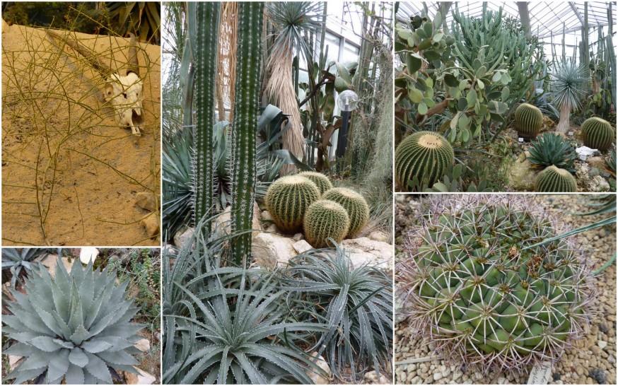 Cactus Palmengarten