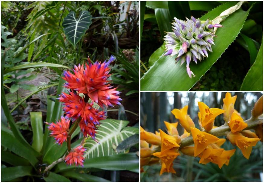 Serres tropicales Palmengarten 2