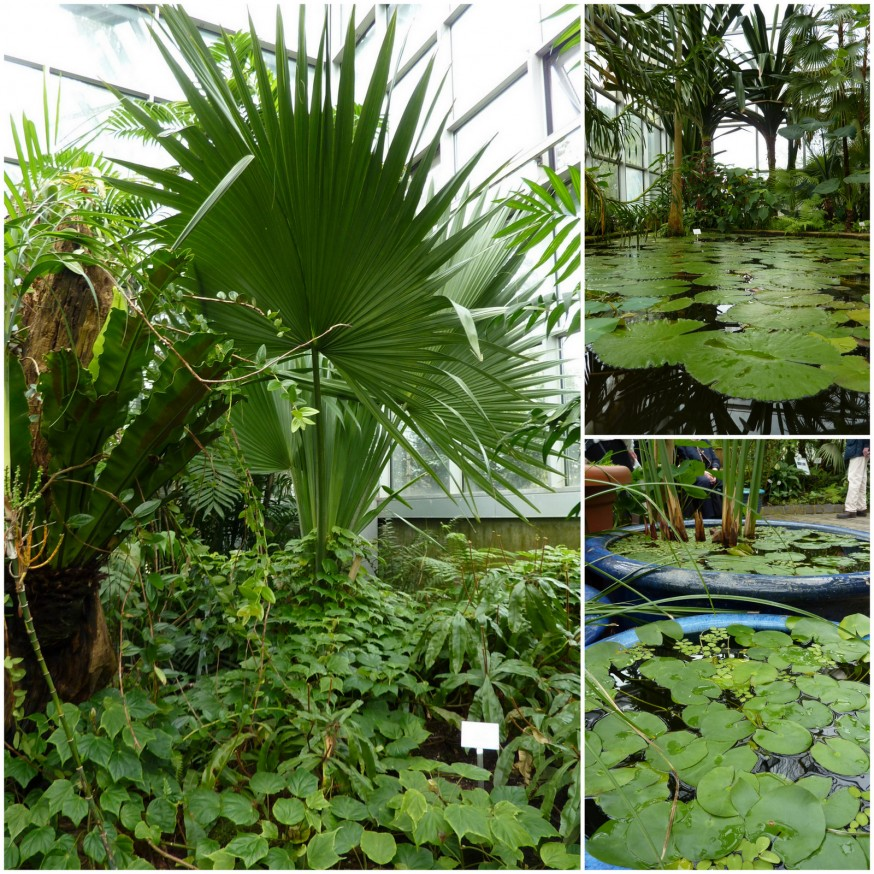 Serres tropicales Palmengarten
