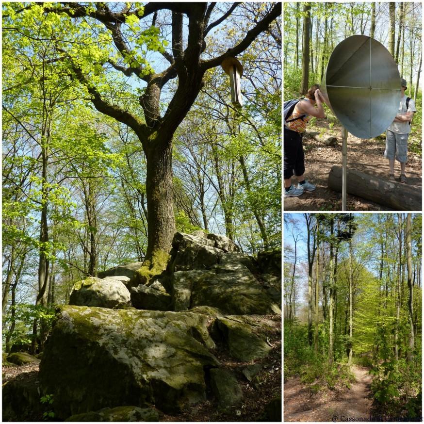 Forêt Frankenstein