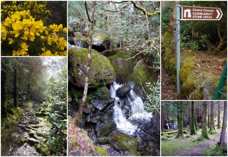 Forêt de Lauragh Peninsule de Beara