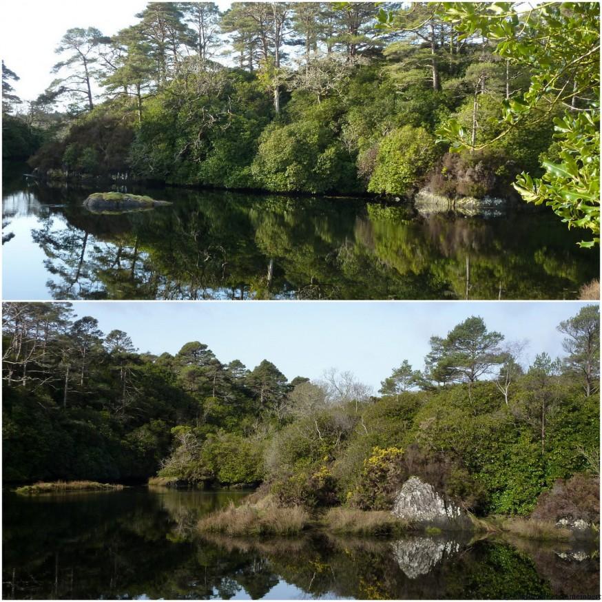 Végétation luxuriante Irlande