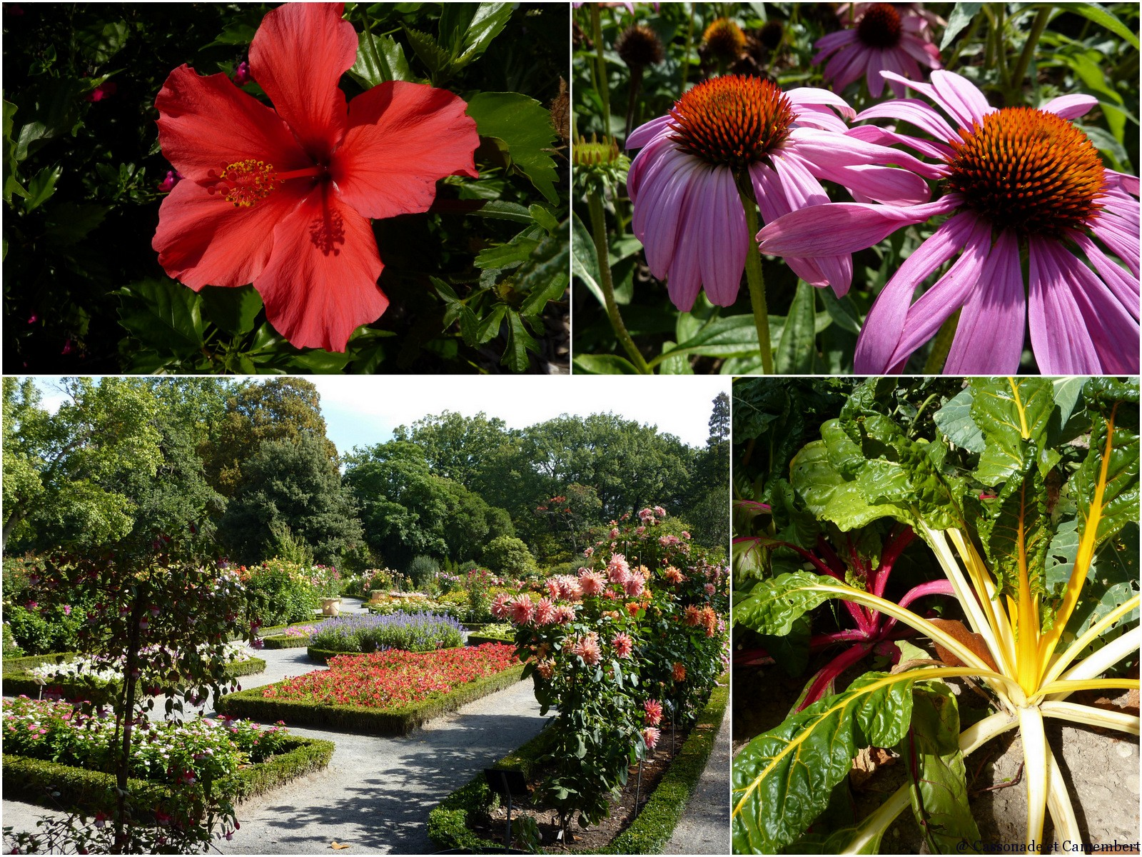 Jardin botanique parc de la tete d or lyon cassonade et - Jardin botanique de lyon ...