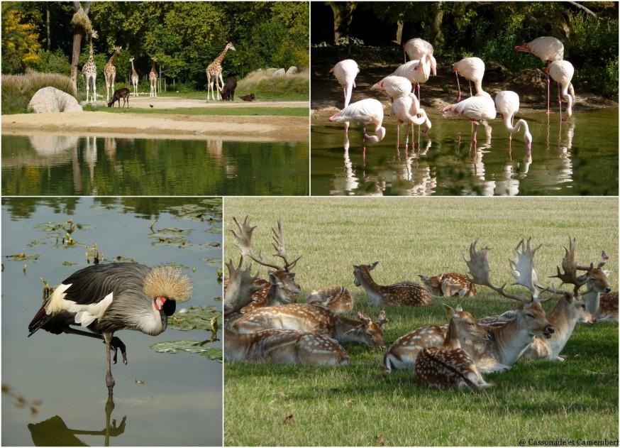 Zoo parc de la tete d or Lyon