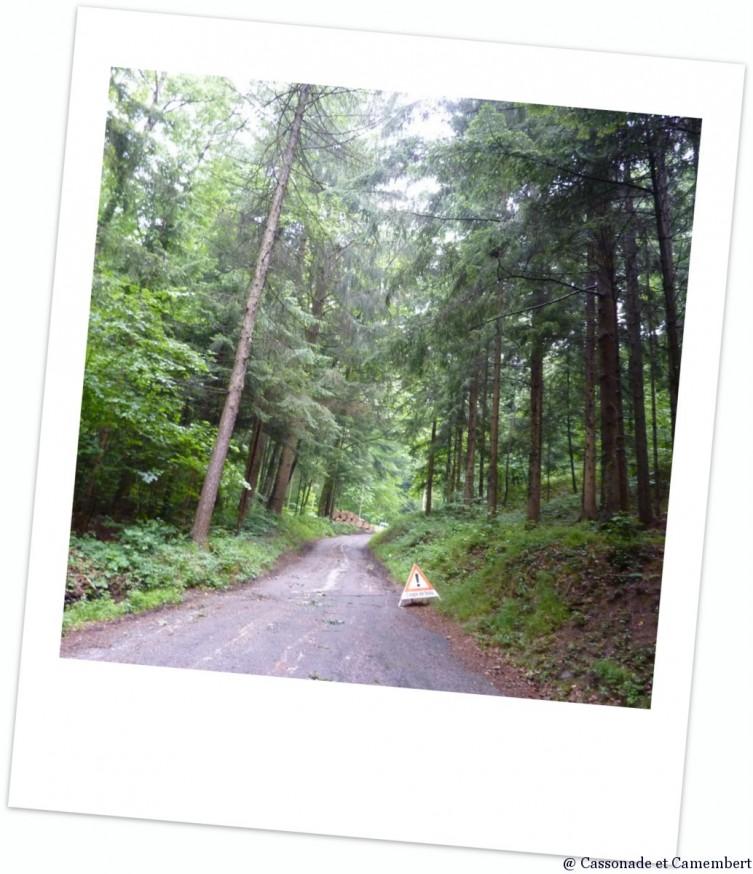 Perdus dans la forêt