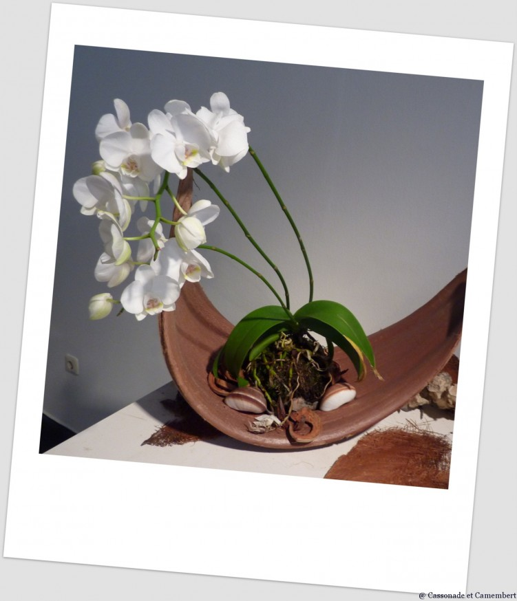 Orchidée BUGA Koblenz