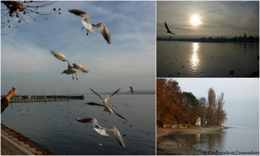 Bords du lac de Konstanz