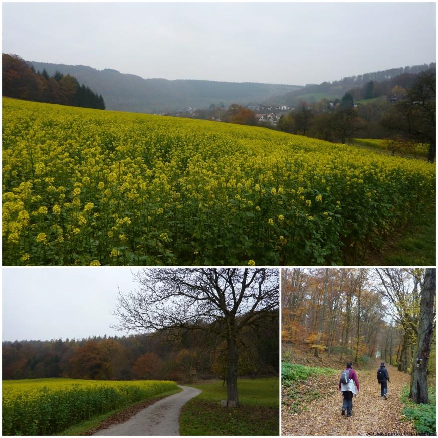 Champs jaunes
