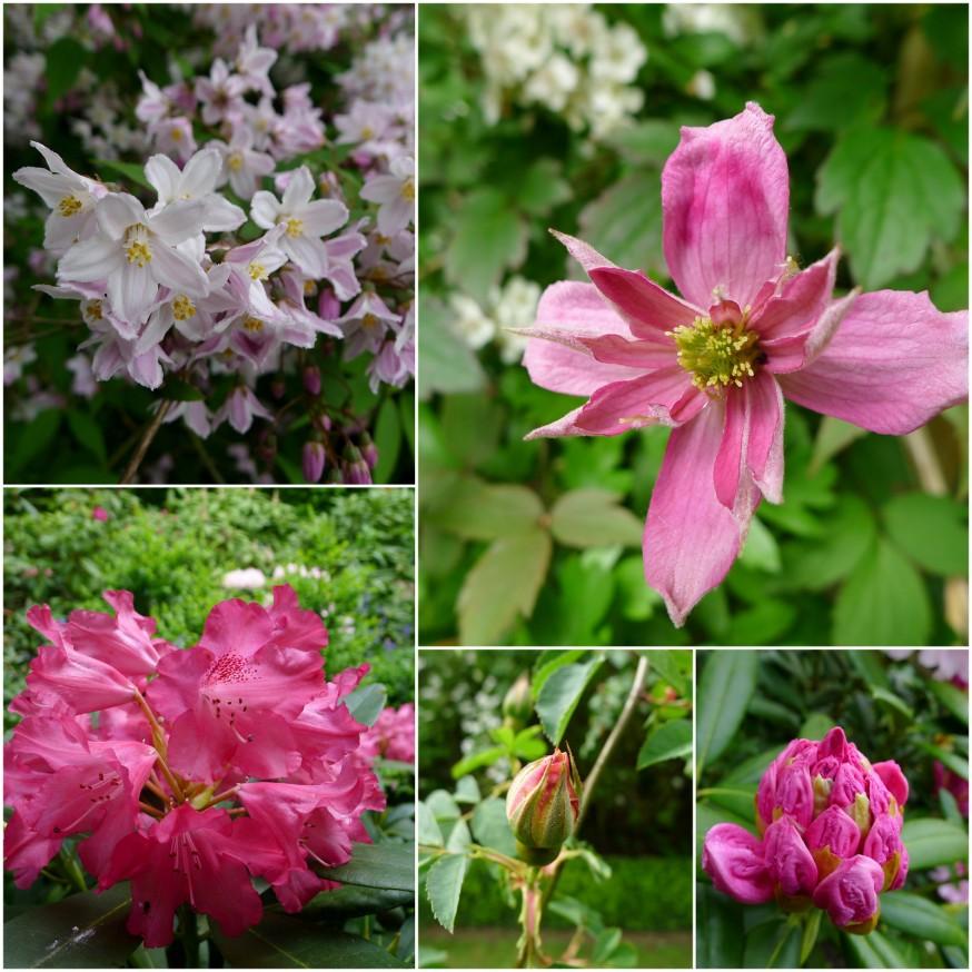Floraisons roses - ferme du Mont des Recollets