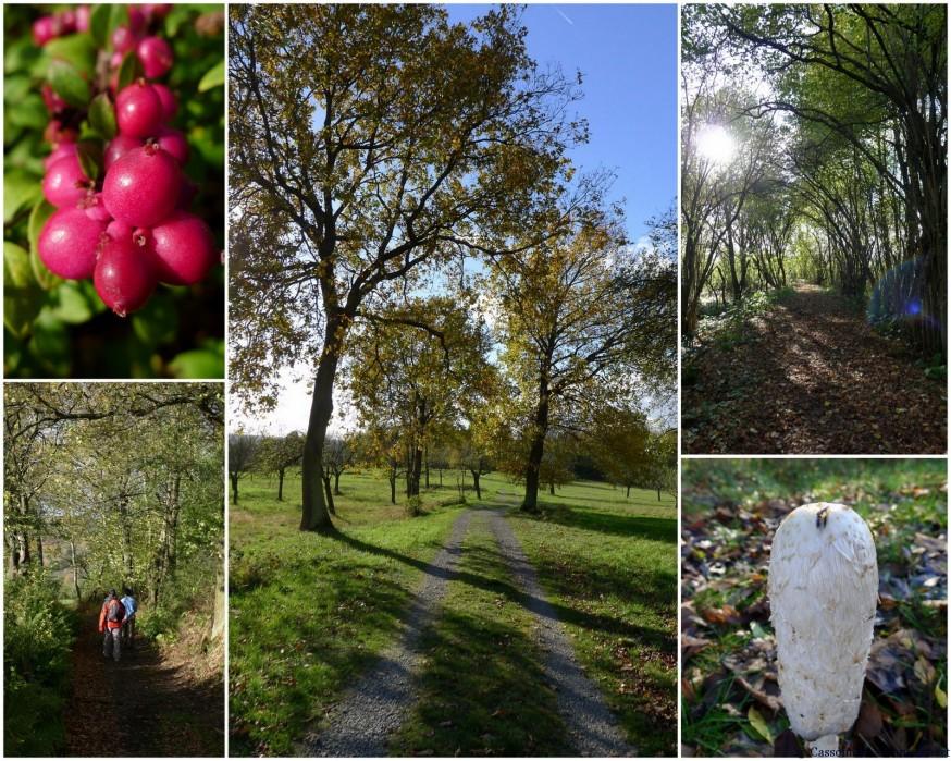 Randonnee a aschaffenburg automne Obernau