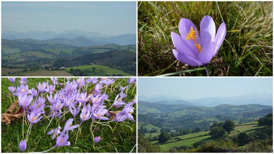 fleurs pays basque - compostelle pays basque