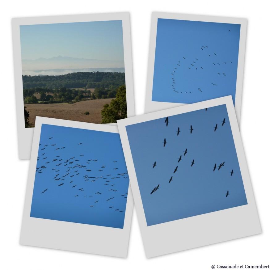 oiseaux migrateurs  - compostelle pays basque