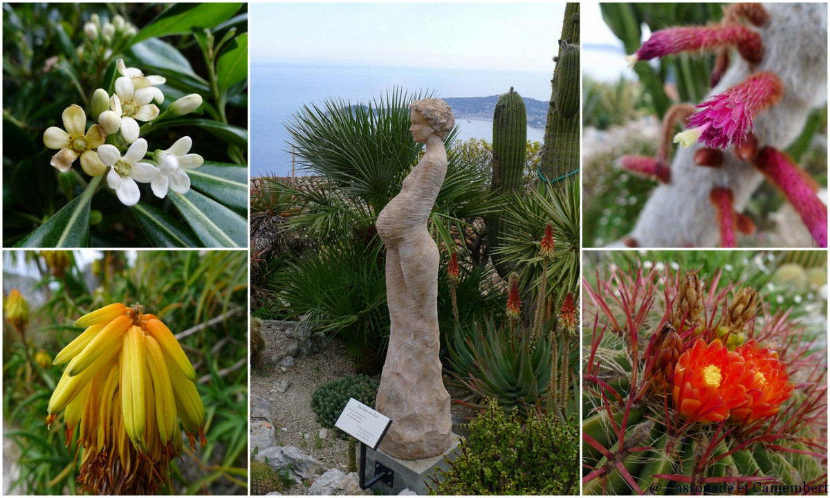 Emejing eze et le jardin exotique contemporary for Jardin exotique