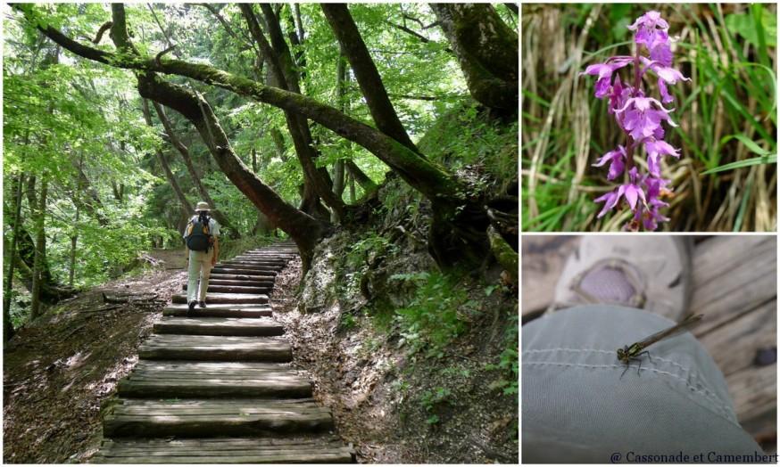 Orchidée Parc des lacs de Plitvice