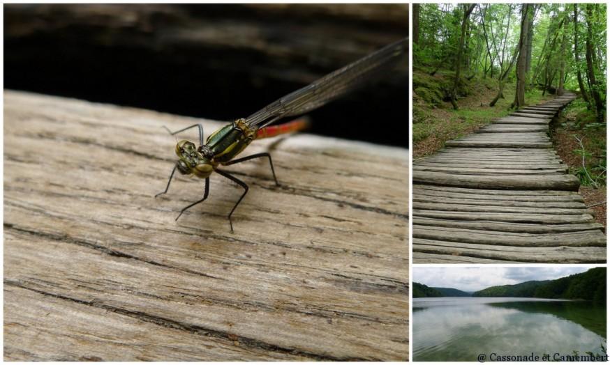 Libellule Parc des lacs de Plitvice
