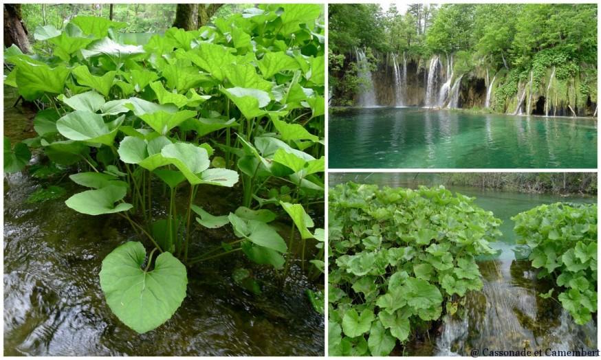 Eau cristalline Parc des lacs de Plitvice
