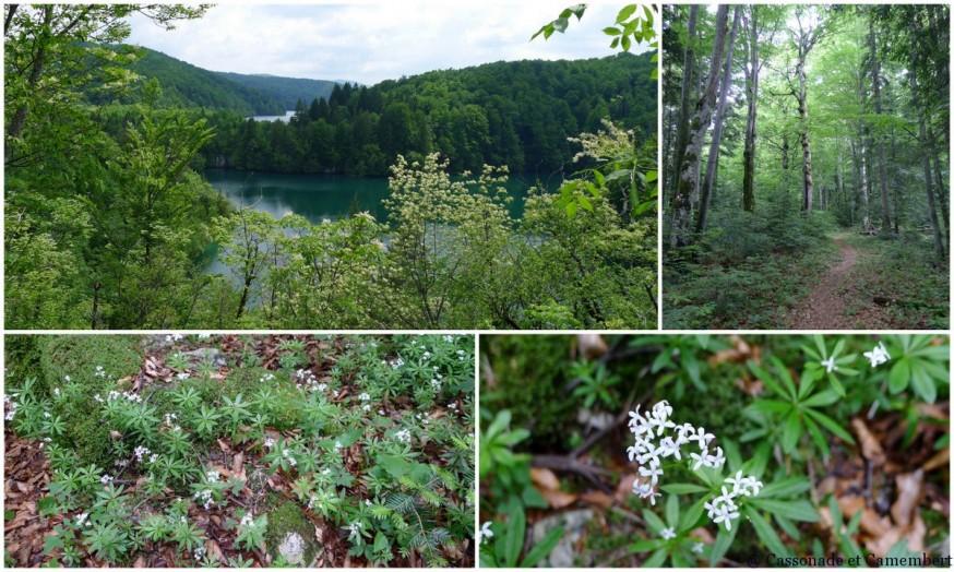 Randonnée forêt Parc des lacs de Plitvice