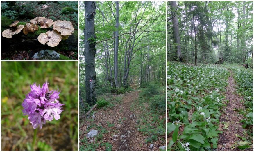 Forêt Parc Plitvice