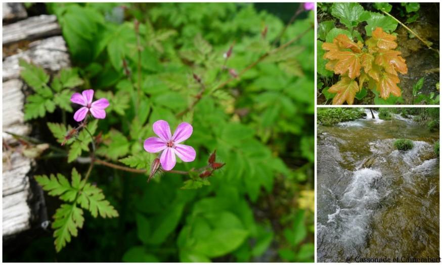 Flore Parc des lacs de Plitvice