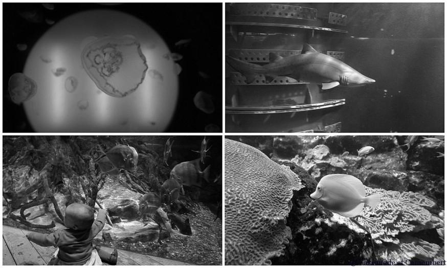 Aquarium Saint Malo noir et blanc