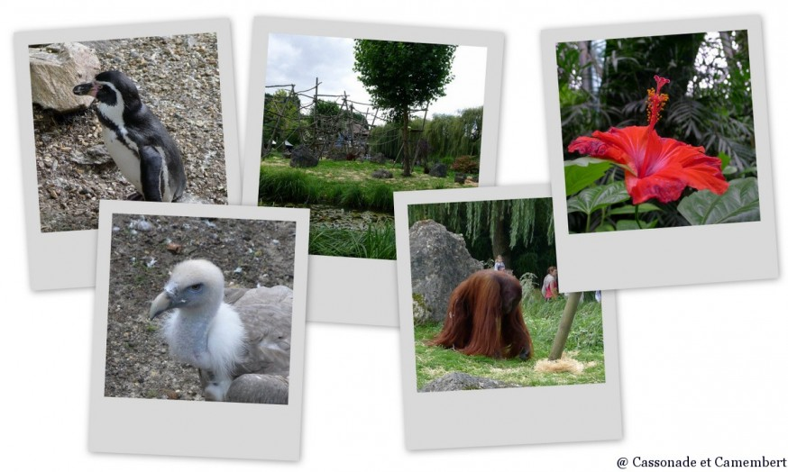 Orang Outan Zoo de Beauval