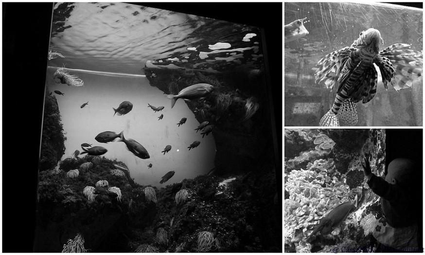 Poissons aquarium Saint Malo noir et blanc