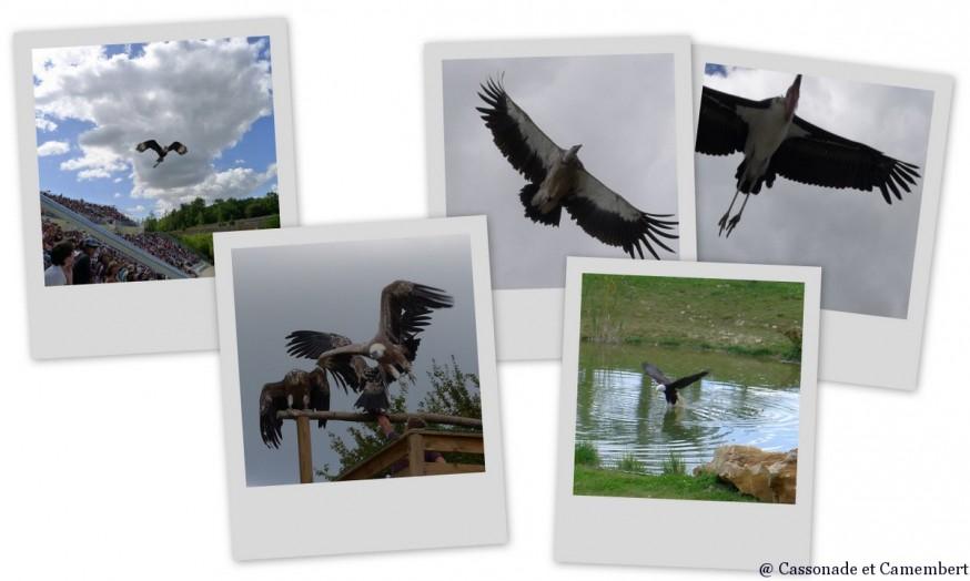 Spectacle d oiseaux Zoo de Beauval