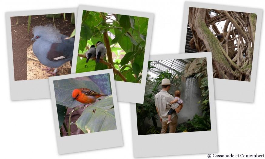 Volière Zoo de Beauval