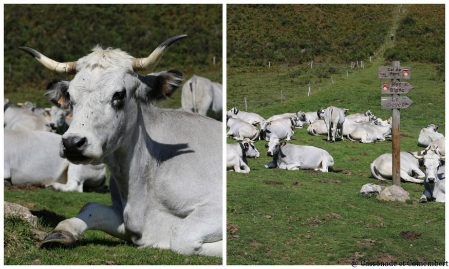 Col de Port vaches en estive ete indien ariege