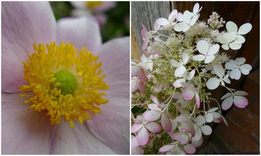 Fleurs jardins du pays d auge