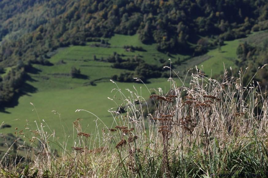 Herbes folles chateau de Montsegur